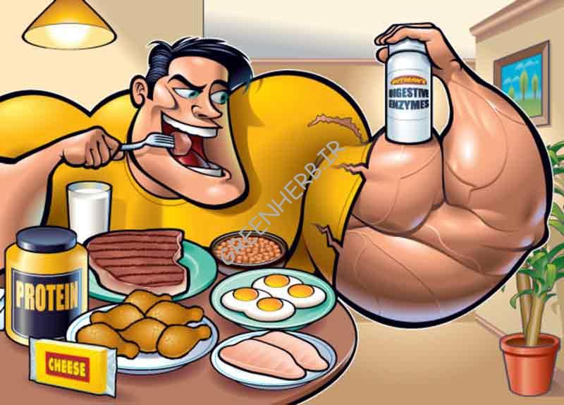 بهترین پروتئین برای عضله سازی