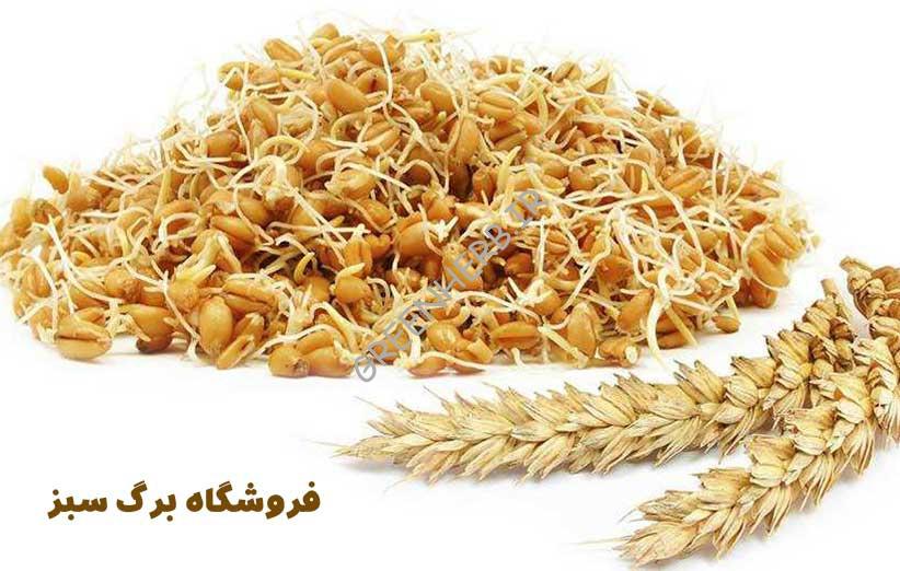 مصرف جوانه گندم + 30 خواص فوق العاده!!