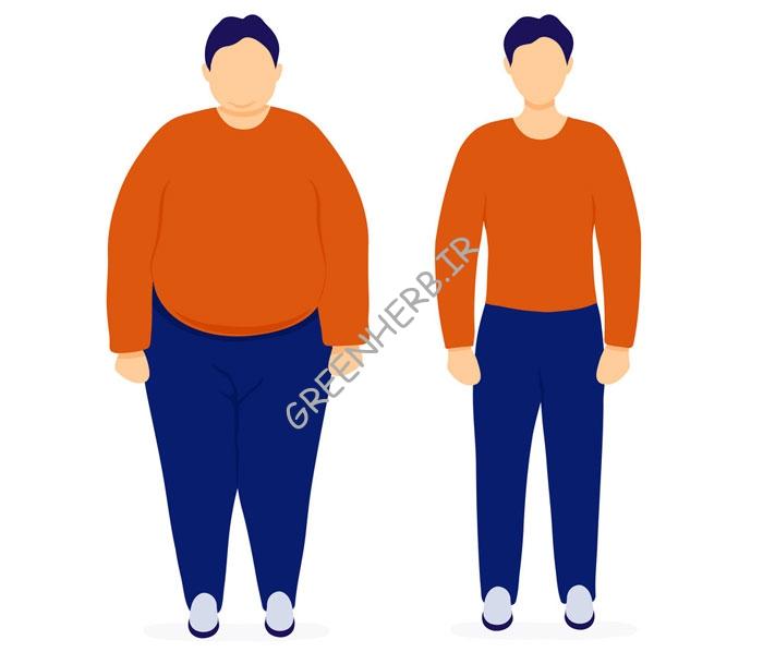 پروتئین برای کاهش وزن